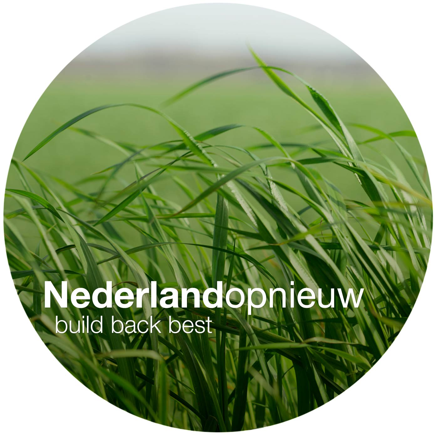 nederlandopnieuw.nl/ build back best